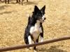 Chirri un perro pastor